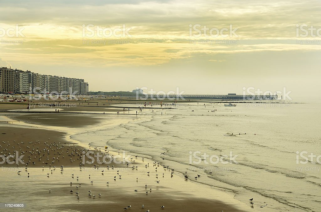 On the beach at dusk with people and seagulls royalty-free stock photo