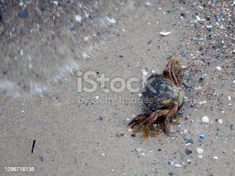 on the beach of the Baltic Sea crawls a small crab