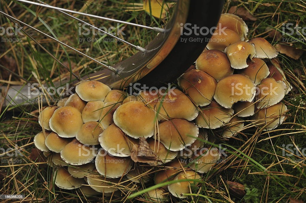 On the bike for mushrooms royalty-free stock photo