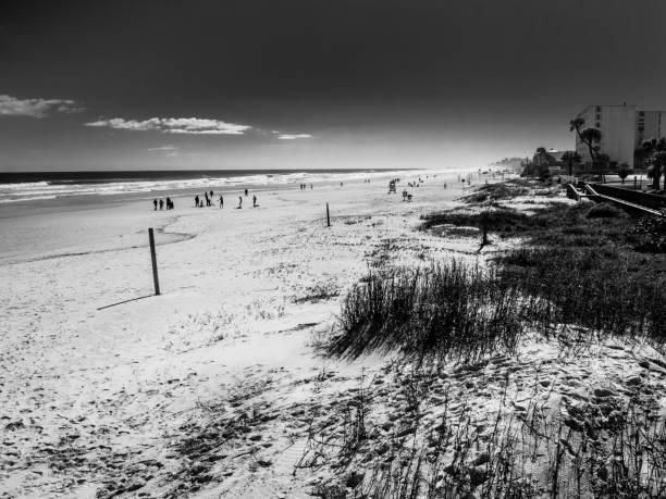 On the edge of the beach. stock photo
