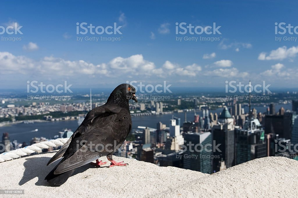 On the Empire State Building royalty-free stock photo