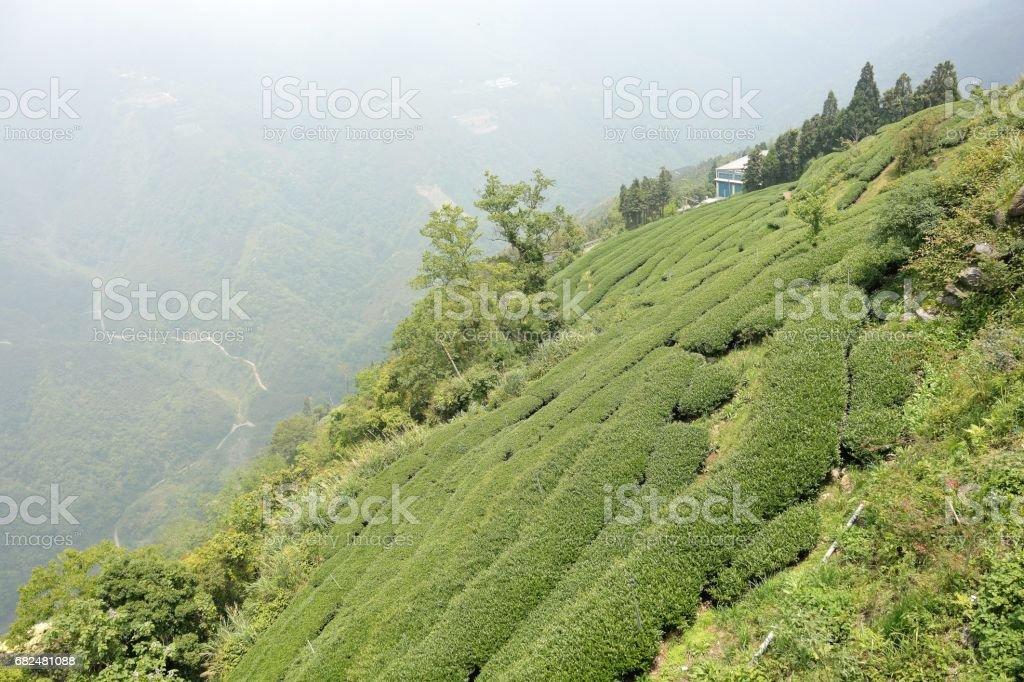 On the hillside tea garden royalty-free stock photo