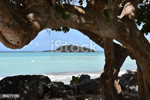 Huge old tree with odd shapes, and colorful blues of the sea and sky are beautiful accents.