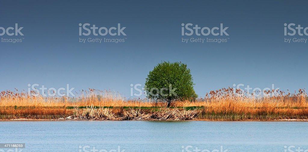 On the lakeside stock photo