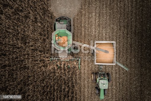 Looking down on the combine and tractor moving through the corn field using the drone to look down.