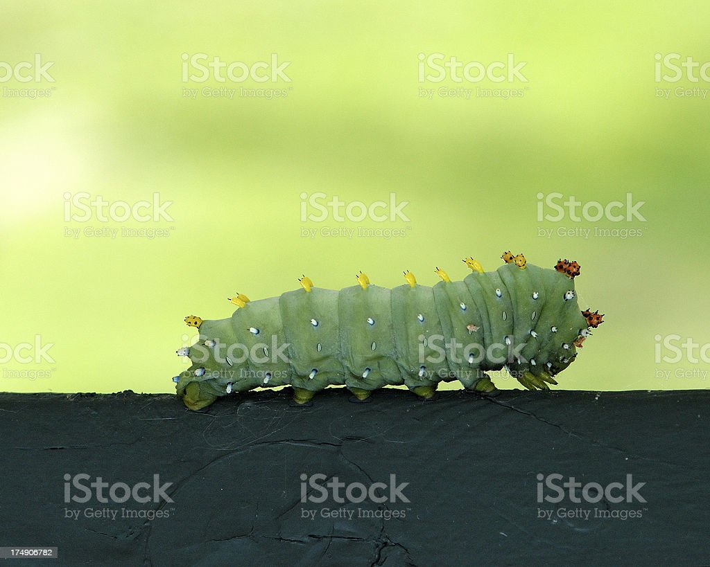 on the move royalty-free stock photo