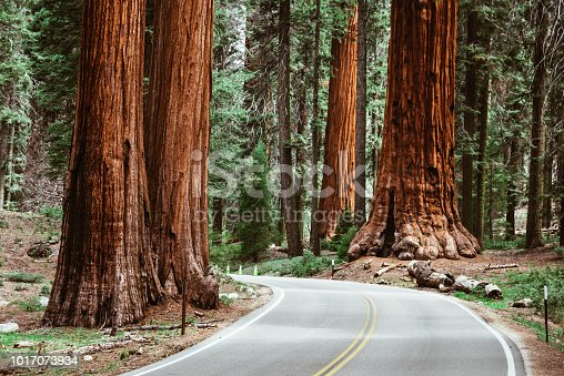 on the road at sequoia national park
