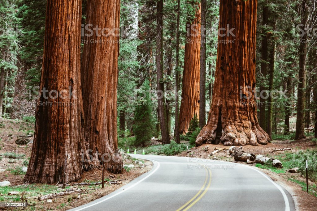 on the road at sequoia national park stock photo