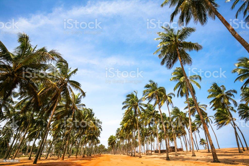 Na estrada, na África Ocidental. Ouidah, Benin. - foto de acervo