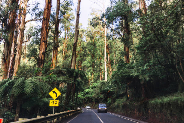 on the road inside the yarra ranges national park on the road inside the yarra ranges national park middle of the road stock pictures, royalty-free photos & images