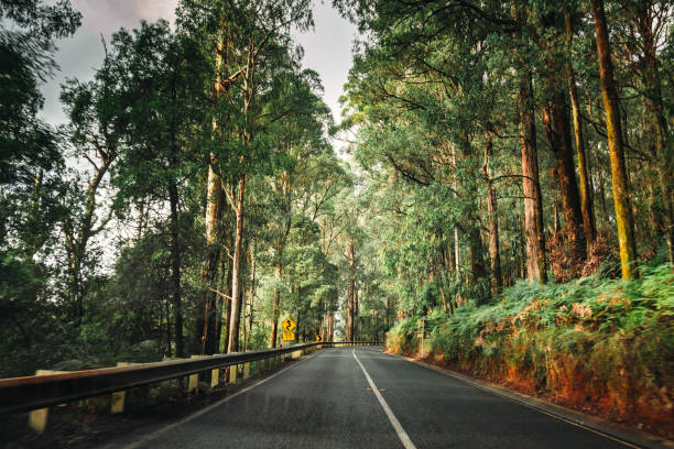on the road inside the yarra ranges national park stock photo