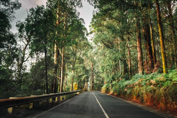 auf der Straße innerhalb der yarra Ranges Nationalpark – Foto