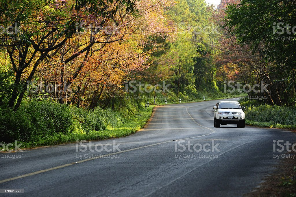 On the road with a car and trees stock photo