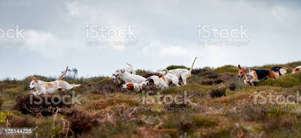 On The Scent Stock Photo - Download Image Now