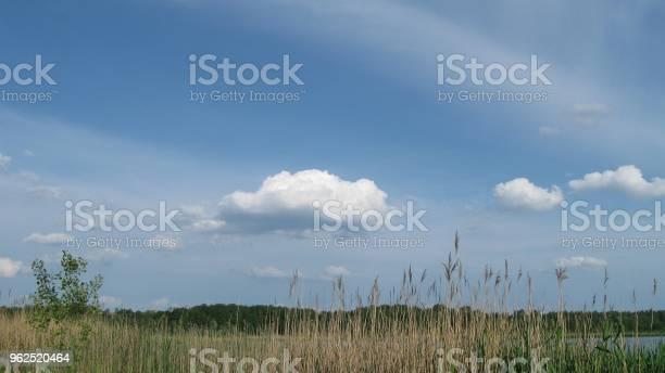 Foto de Na Margem Do Lago e mais fotos de stock de Beleza natural - Natureza