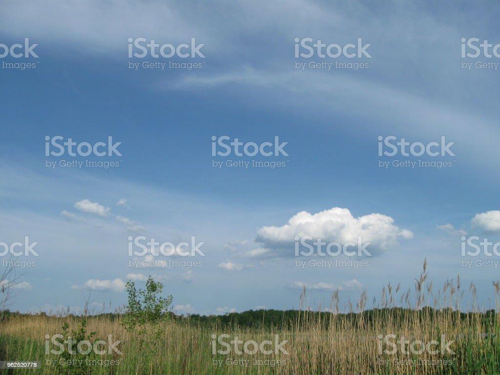 Na margem do lago - Foto de stock de Beleza natural - Natureza royalty-free