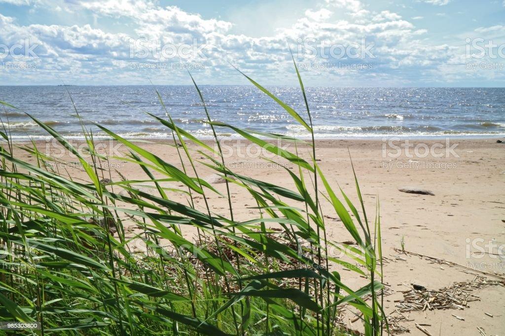 緑の葦の海の海岸 アシのストックフォトや画像を多数ご用意 Istock