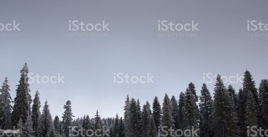 On the slope with a sleigh, Starina place, Belmeken, Rila mountain, Bulgaria stock photo