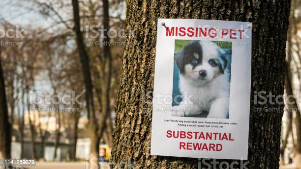 On the tree hangs the announcement of the missing puppy picture id1141259679?b=1&k=6&m=1141259679&s=612x612&h=hwyc6l8ed8cv4yhdamibp3smitnd4  9ffcqkapwnzo=