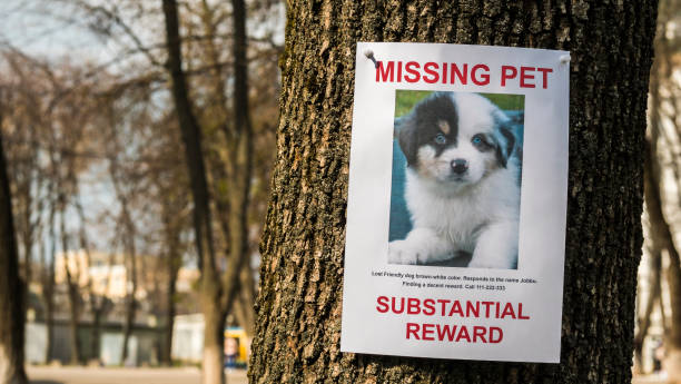 on the tree hangs the announcement of the missing puppy - lost стоковые фото и изображения