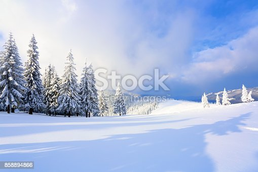 istock On the wide lawn there are many fir trees standing under the snow on the frosty winter day. The game of light and shadow beautifully plays with volumes. Beautiful winter background. 858894866