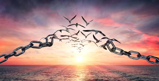 na skrzydłach wolności - ptaki latające i połamane łańcuchy - koncepcja szarży - nadzieja zdjęcia i obrazy z banku zdjęć
