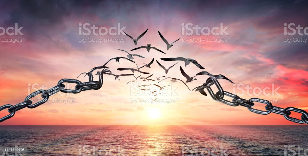 Sur les ailes de la liberté-oiseaux battant et cassé chaînes-concept de charge - Photo