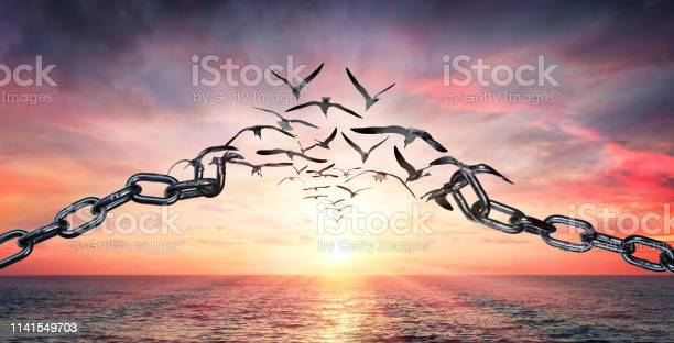 Photo of On The Wings Of Freedom - Birds Flying And Broken Chains - Charge Concept
