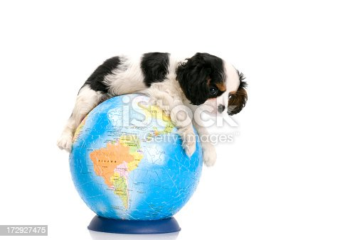 young dog sitting on the world