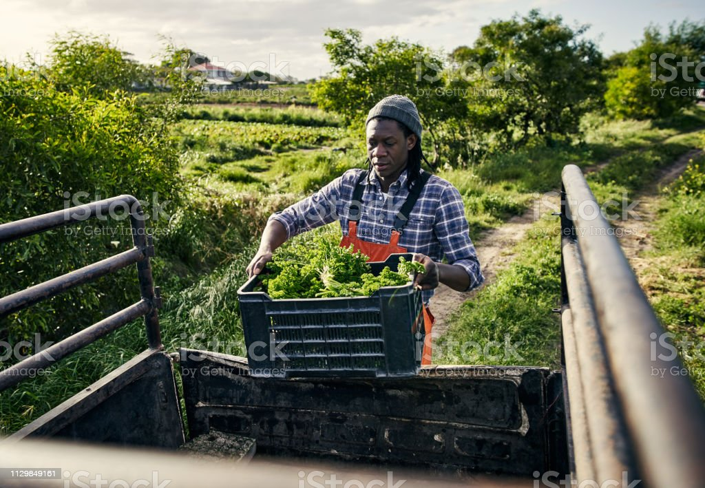 On their way to the farmer's market Shot of a young man packing freshly picked produce into a vehicle on a farm Adult Stock Photo