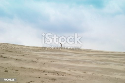 istock On top of the dune 179008287