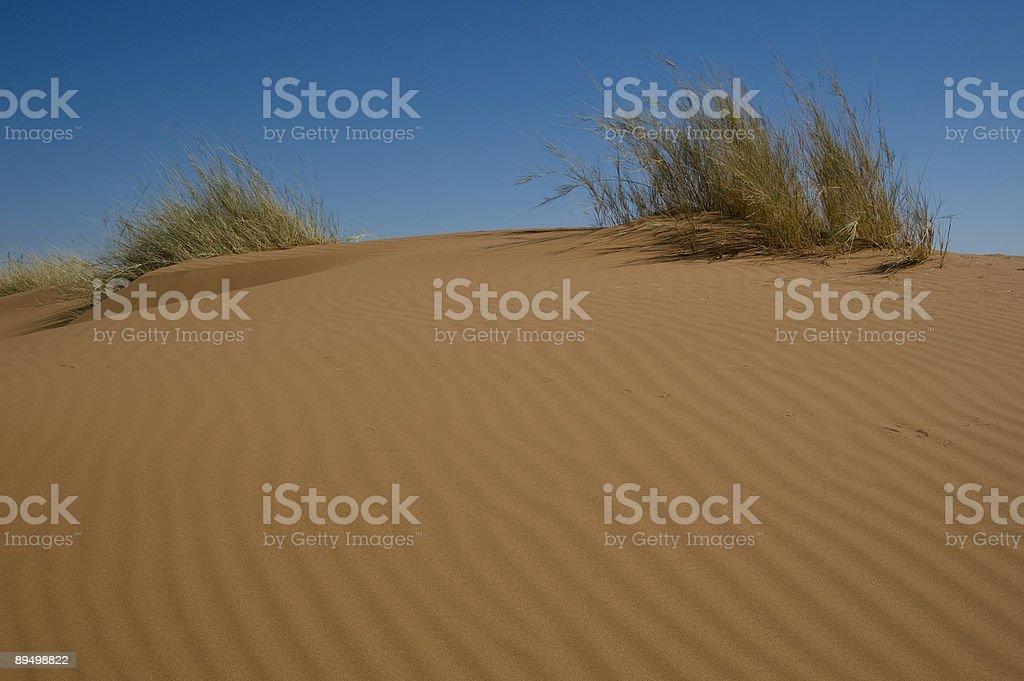 Sulla cima della duna foto stock royalty-free
