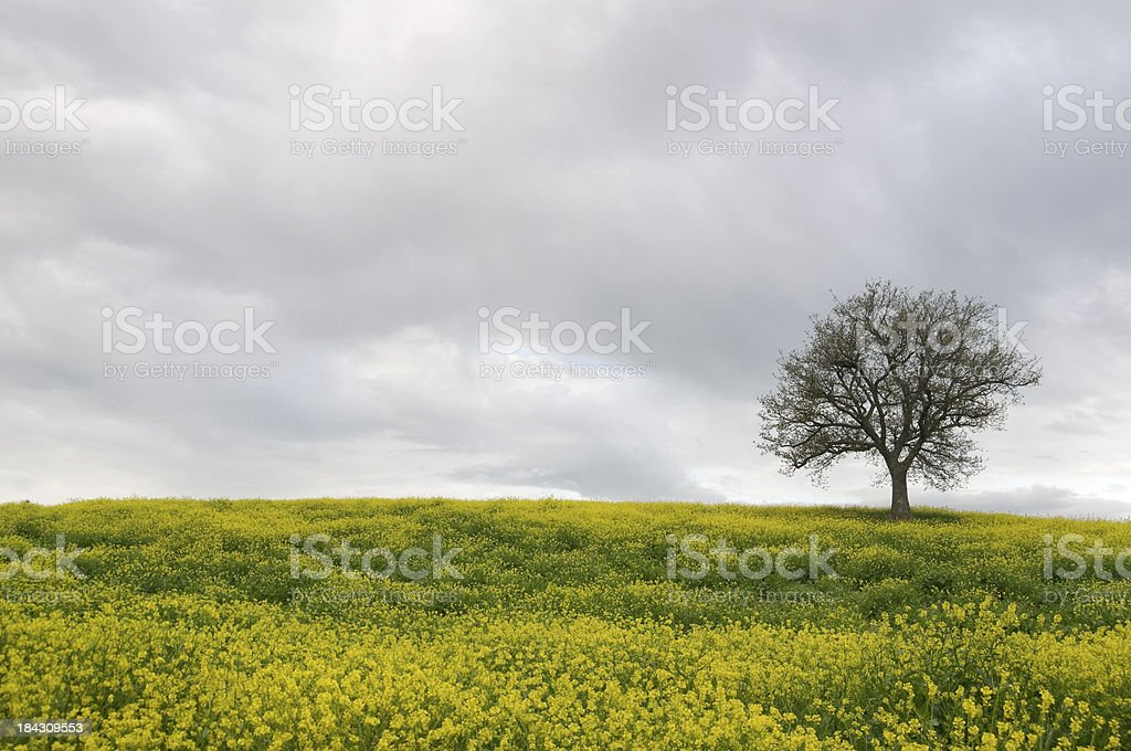 On tree royalty-free stock photo