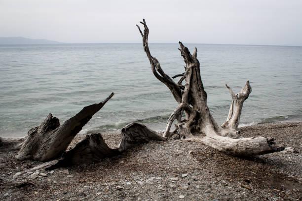 Am Rande des Wassers – Foto