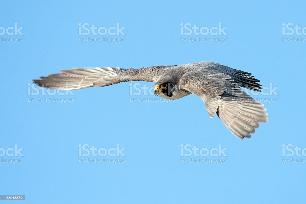 On Wings stock photo