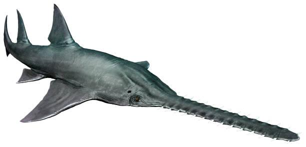 ilustración 3d de onchopristis - pez sierra fotografías e imágenes de stock