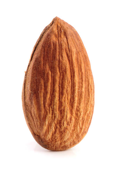 One almond isolated on white background macro stock photo