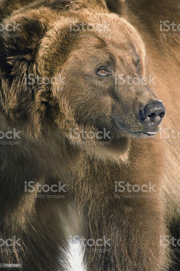 One big boy stock photo