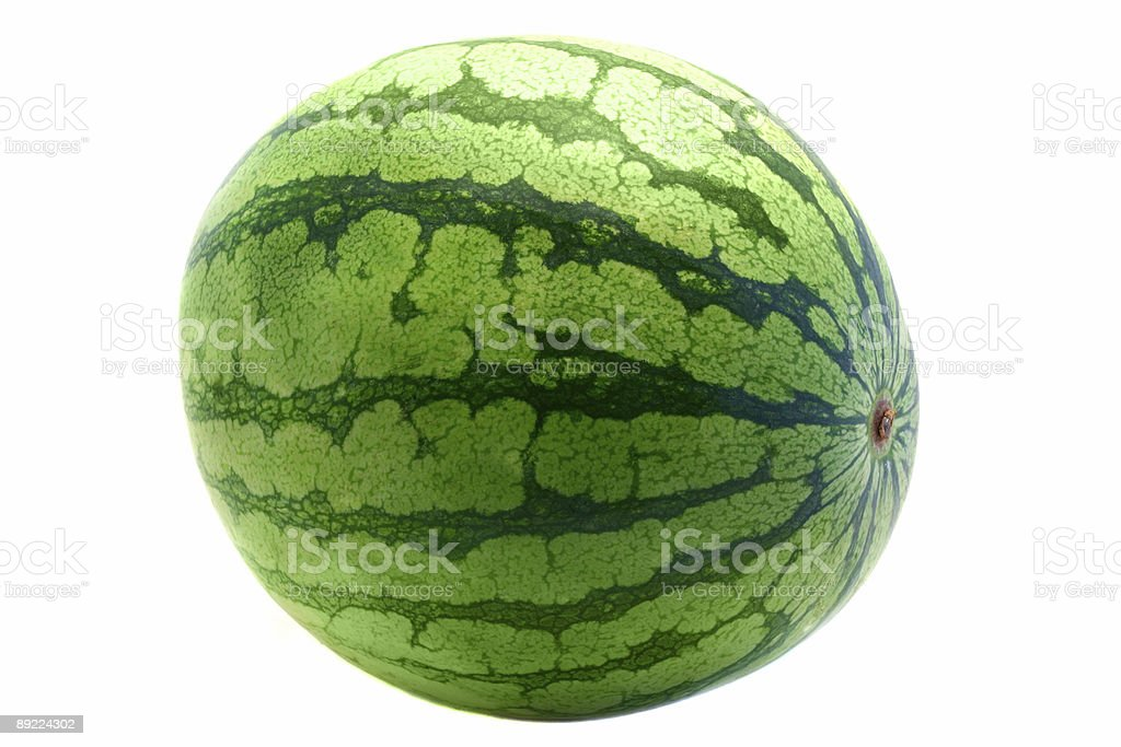 one big shiny watermelon royalty-free stock photo