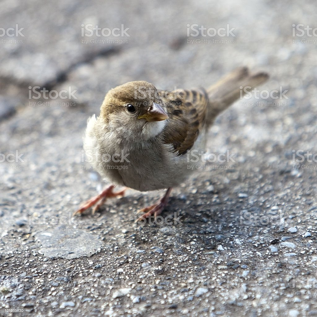 One bird in the hand is worth two i.t bush stock photo