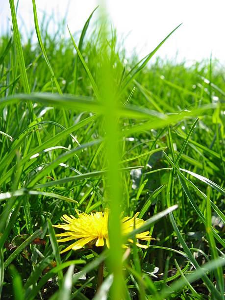ein unscharfem klinge in der gras, nahaufnahme - herpens stock-fotos und bilder