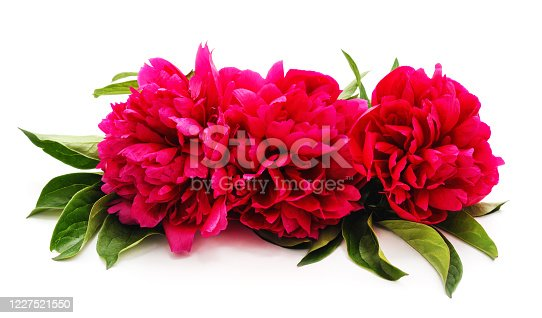 One bouquet of the peony isolated on a white background.