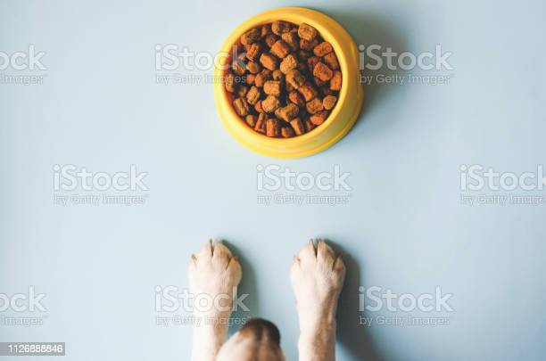 One bowl of yellow color with food and paws with a dog face picture id1126888846?b=1&k=6&m=1126888846&s=612x612&h=vihfevm9sbe0a111eehwgyuaqfaofnazr1t0cjjjysq=