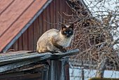 one brown cat sits and looks on a gray roof in the street