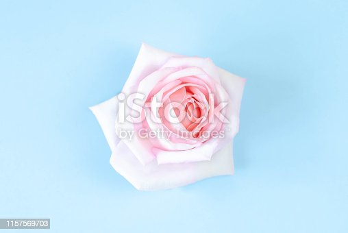 1147995495 istock photo One bud of a soft pink rose on a blue background. 1157569703