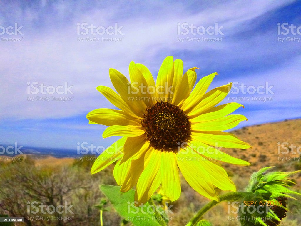 One candle's light sheds beauty on all. stock photo