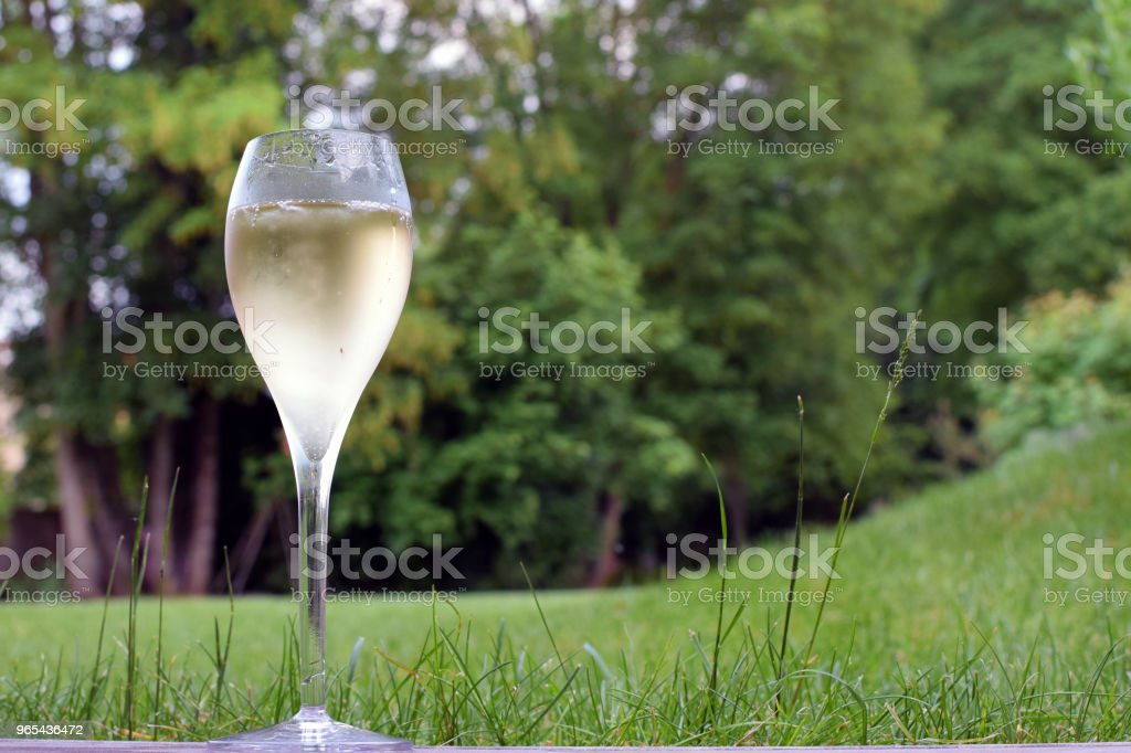 One champagne glass royalty-free stock photo