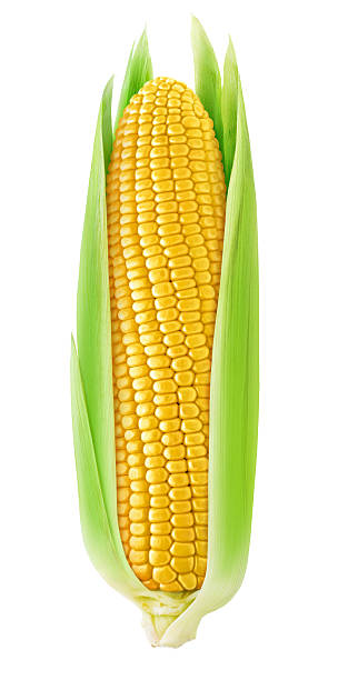 One corn with leaves isolated on white with clipping path stock photo