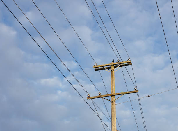 One Crow Watches from a Utility Pole Under Cloudy Skies stock photo