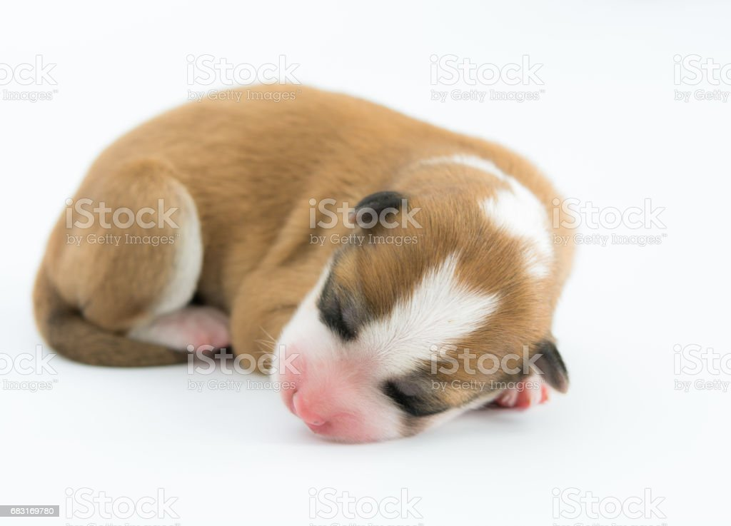 One day for newborn pup isolate royalty-free stock photo